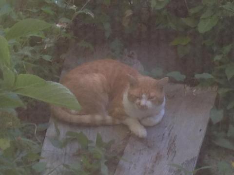13_11_3_cat_2