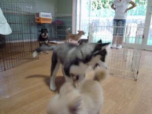 2013年7月犬の幼稚園 023