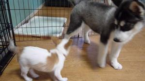 2013年7月犬の幼稚園 017