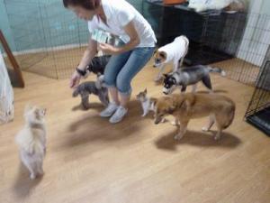 2013年7月犬の幼稚園 037