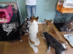 2013年7月犬の幼稚園 041