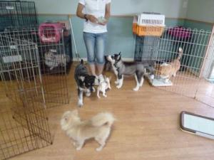 2013年7月犬の幼稚園 034