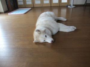 2013年7月犬の幼稚園 015