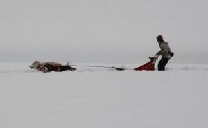 2014年橇練ステラフェリス 780