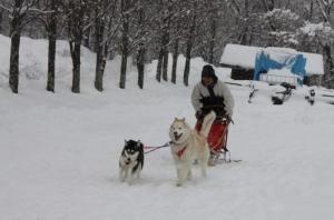 2014年橇練ステラフェリス 1084
