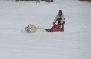 2014年橇練ステラフェリス 1035