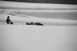 2014年橇練ステラフェリス 1166