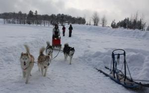 2014年橇練ステラフェリス 1266