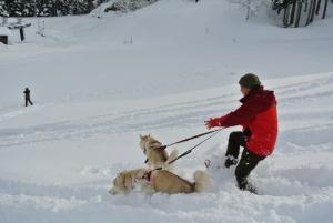 2014年橇練ステラフェリス 086