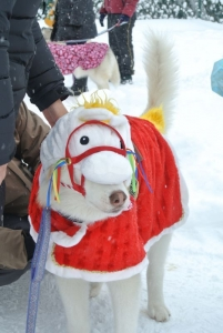 2014年橇練ステラフェリス 361