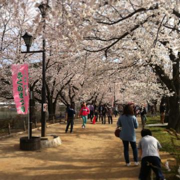 20130414CAAD10臥竜公園桜
