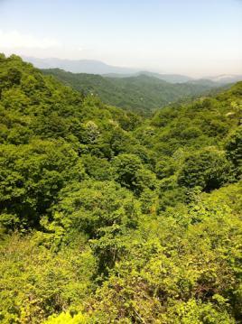20130603CAAD10信越五高原ロングライド試走緑