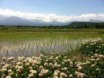 20130603信越五高原ロングライド2013