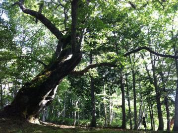 20130711CAAD10五高原試走2戸隠の木