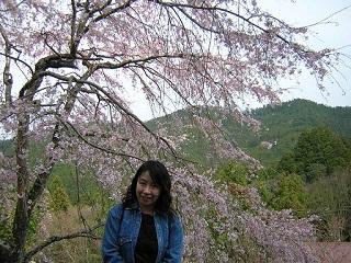 桜・吉野千本桜