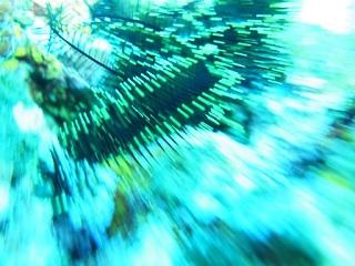 20130525宮古島海シダ光の流れ