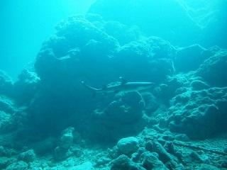 20130526宮古島サンゴホールネムリフカ
