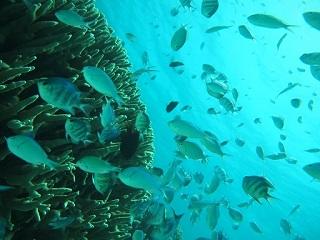 20130628熱帯魚乱舞