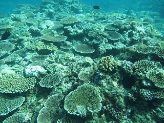 20130630ダイアナサンゴ礁