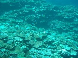 20091109サシバ沖サンゴ礁