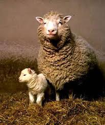 羊のドリー