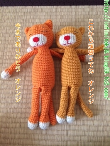 orangecatnew3.jpg