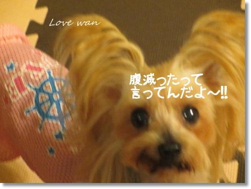 mini2IMG_9832.jpg
