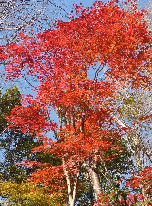 鉾岳登山道の紅葉