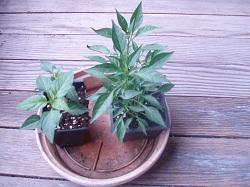 6 PlantsLisa