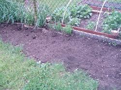 7 Dan Garden