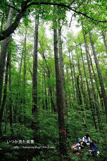 森の声を聞く