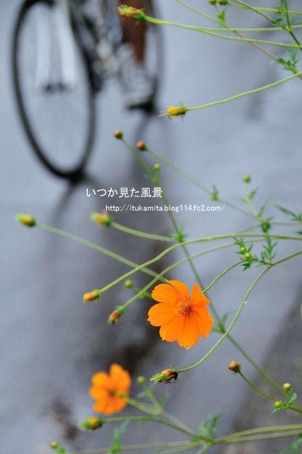D3C_0667ri-s.jpg