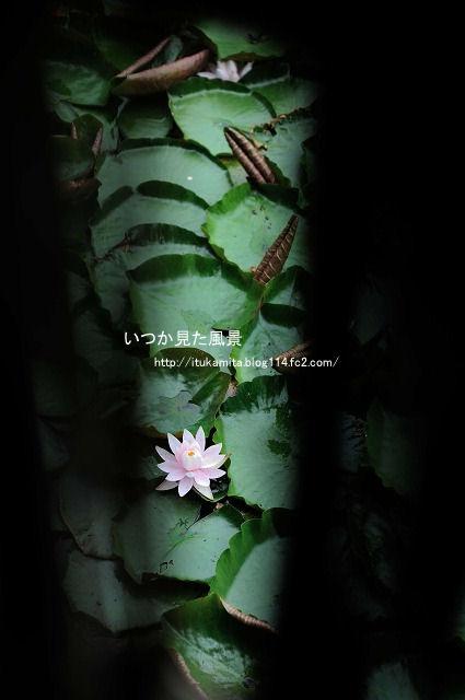 DS7_1245ri-s.jpg