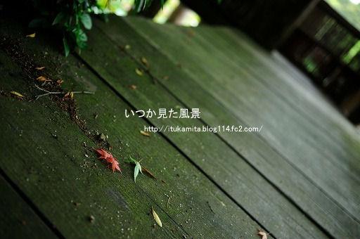 DS7_1251ri-ss.jpg