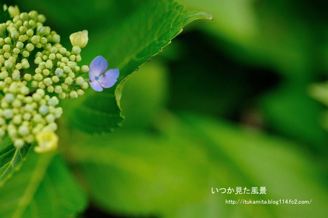 DS7_1356ri-s.jpg