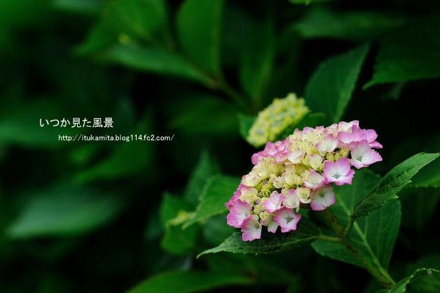 DS7_1378ri-s.jpg