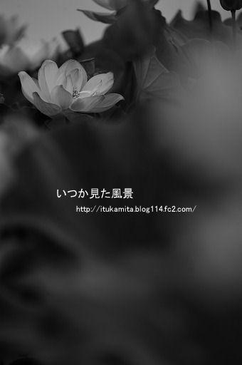 DS7_2243wi-ss.jpg