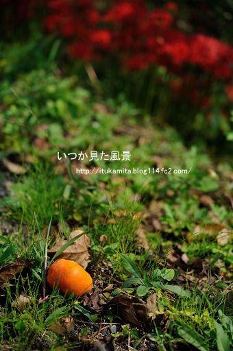 DS7_2704ri-ss.jpg