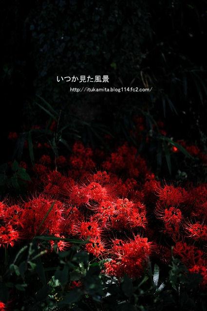 DS7_2709ri-s.jpg