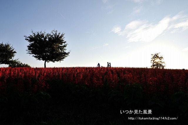 DS7_3023ri-s.jpg