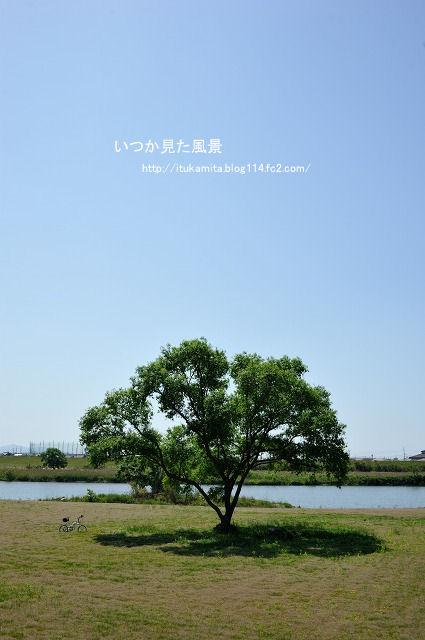この樹なんの木