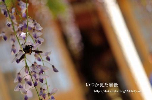 DS7_9175ri-ss.jpg