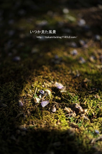 DS7_9261i-s.jpg