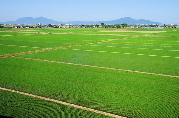 越後平野の田んぼ