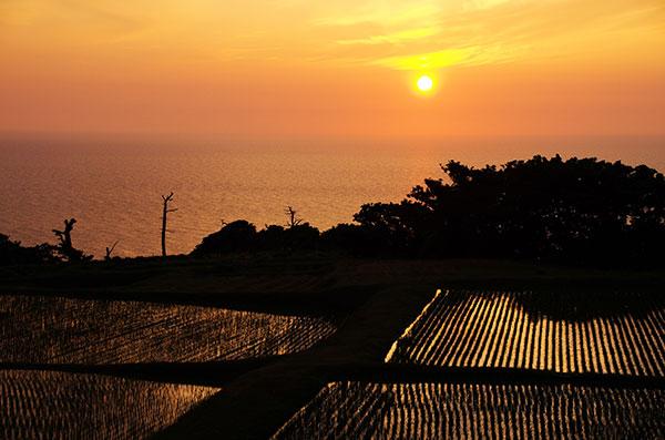 落日の棚田