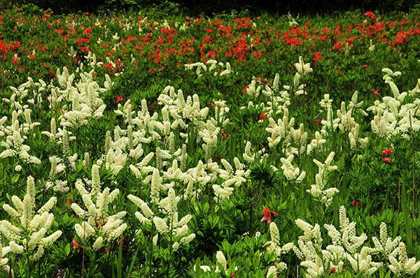 湿原の花園
