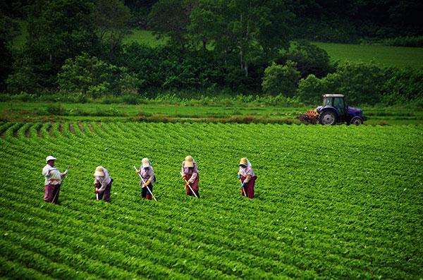 真狩村の農作業風景