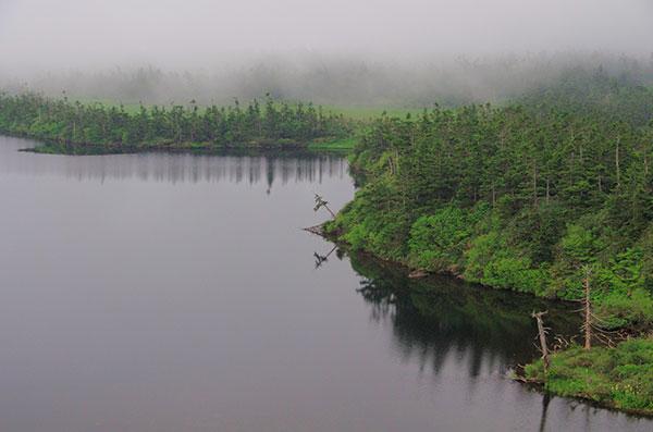 霧にぬれる八幡沼