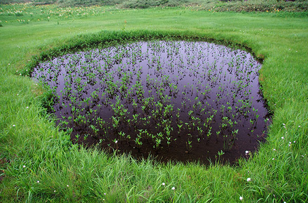 八幡平の池塘