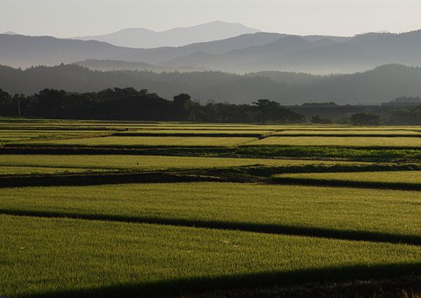 早池峰と田んぼ
